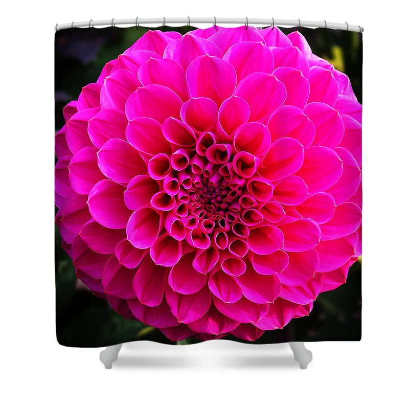 Flower Shower Curtain featuring the photograph Pink Flower by Anthony Jones