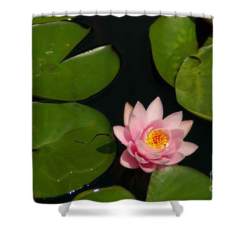 Pink Shower Curtain featuring the photograph Pink Lotus Waterlily by Jackie Irwin