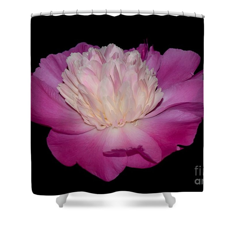 Shower Curtain featuring the photograph Pink Peony Petals by Jeannie Rhode
