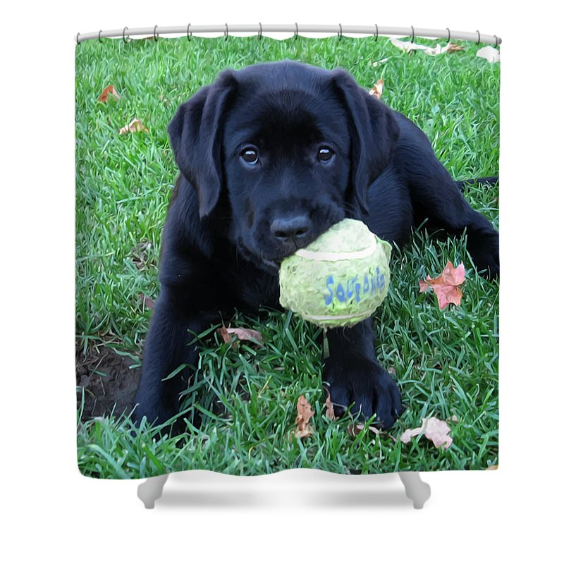 Black+labrador Shower Curtain Featuring The Photograph Play Ball   Black  Labrador By Black Dog
