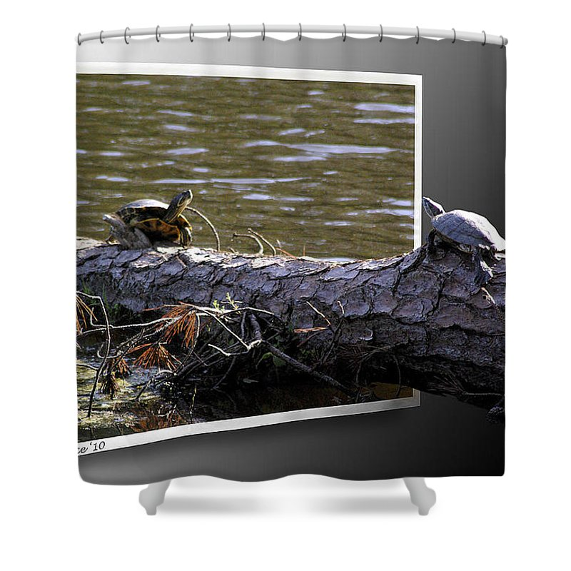 2d Shower Curtain featuring the photograph Playing Chicken by Brian Wallace