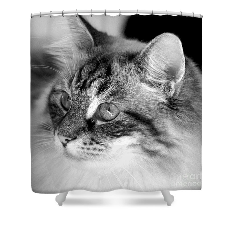 Clay Shower Curtain featuring the photograph Polly by Clayton Bruster