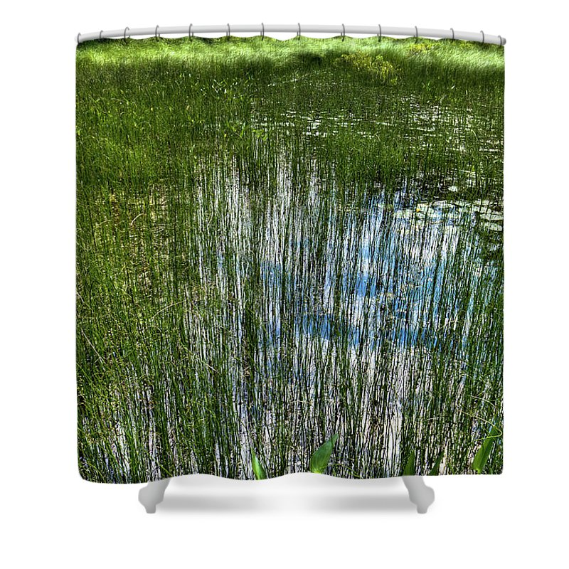 Pond Grasses Shower Curtain featuring the photograph Pond Grasses by David Patterson