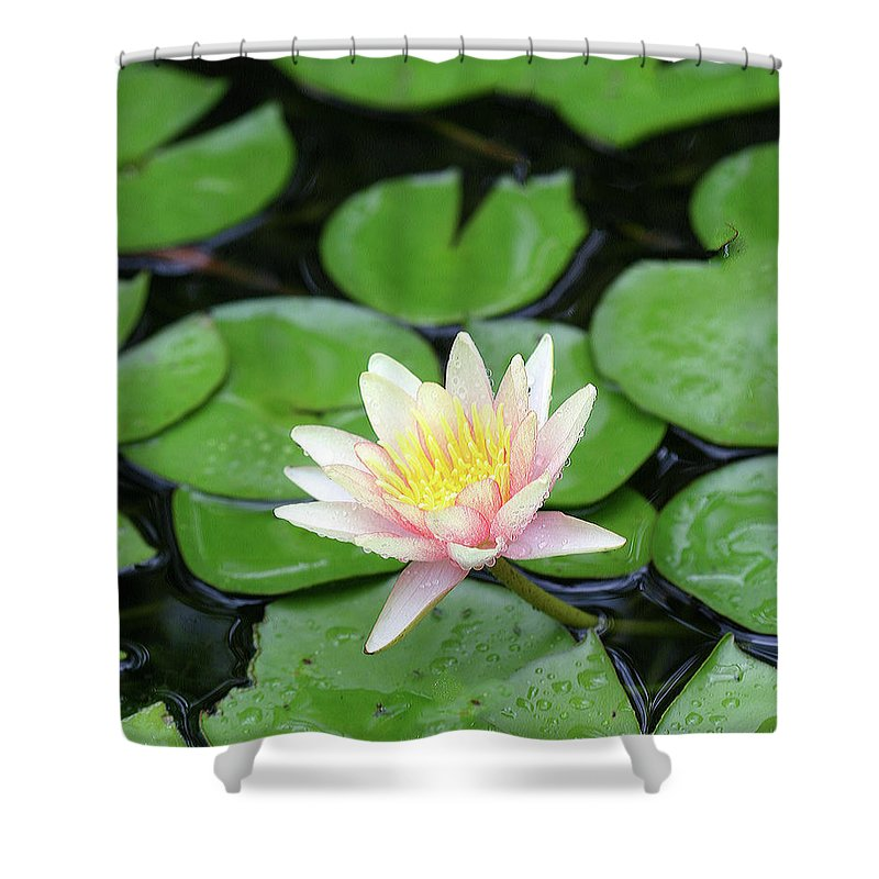 Lily Shower Curtain featuring the photograph Pretty In Pink by Shari Jardina