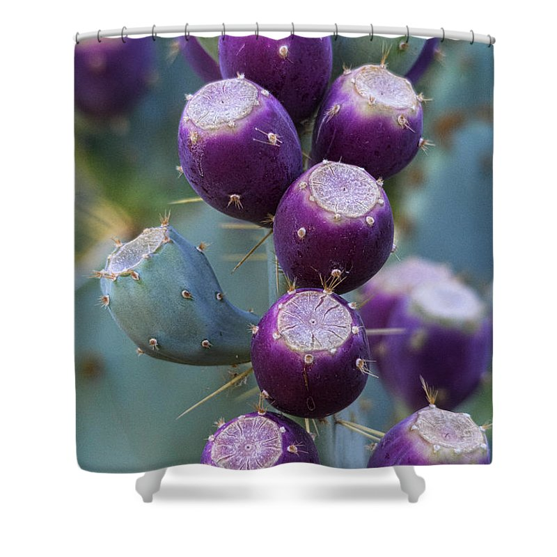 Prickly Pear Cactus Shower Curtain featuring the photograph Prickly Pear Fruit by Saija Lehtonen