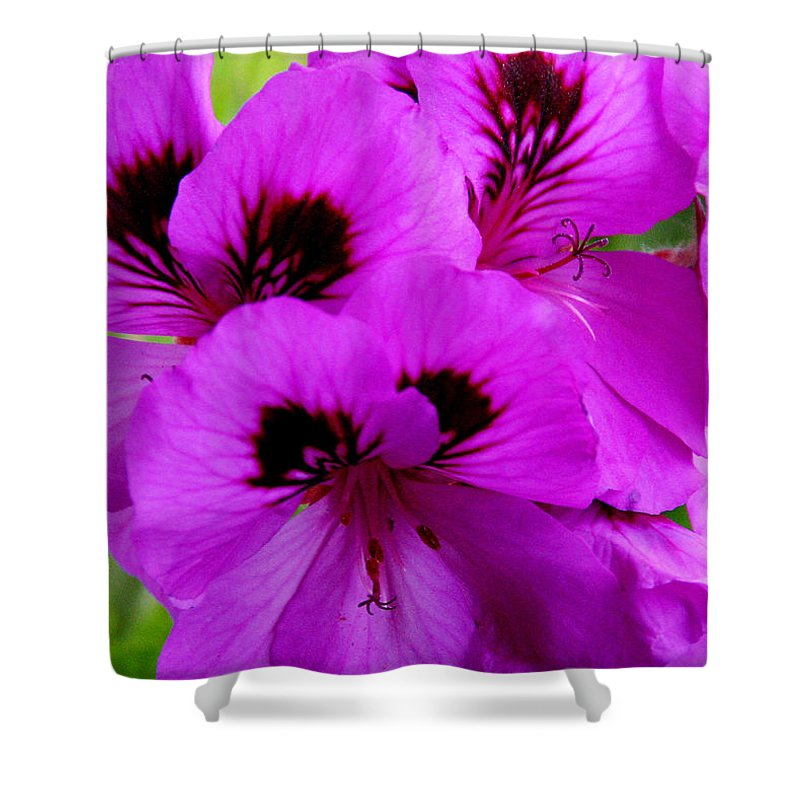 Purple Flowers Shower Curtain featuring the photograph Purple Flowers by Anthony Jones