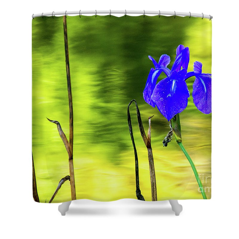 Tinas Captured Moments Shower Curtain featuring the photograph Purple Iris by Tina Hailey