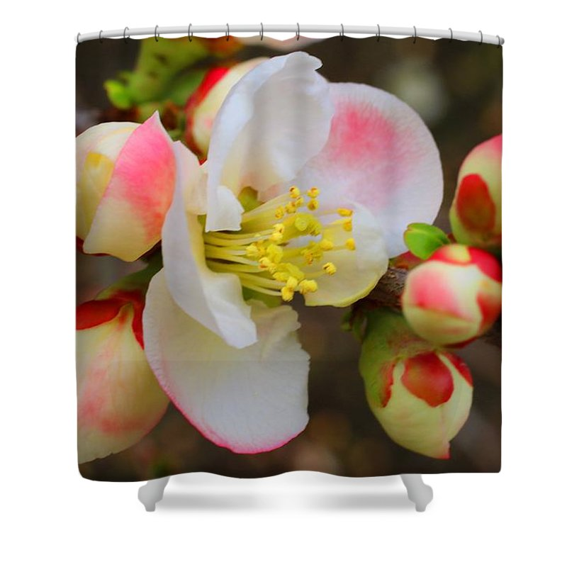 Quince Shower Curtain featuring the photograph Quince Toyo-nishiki by Kathryn Meyer