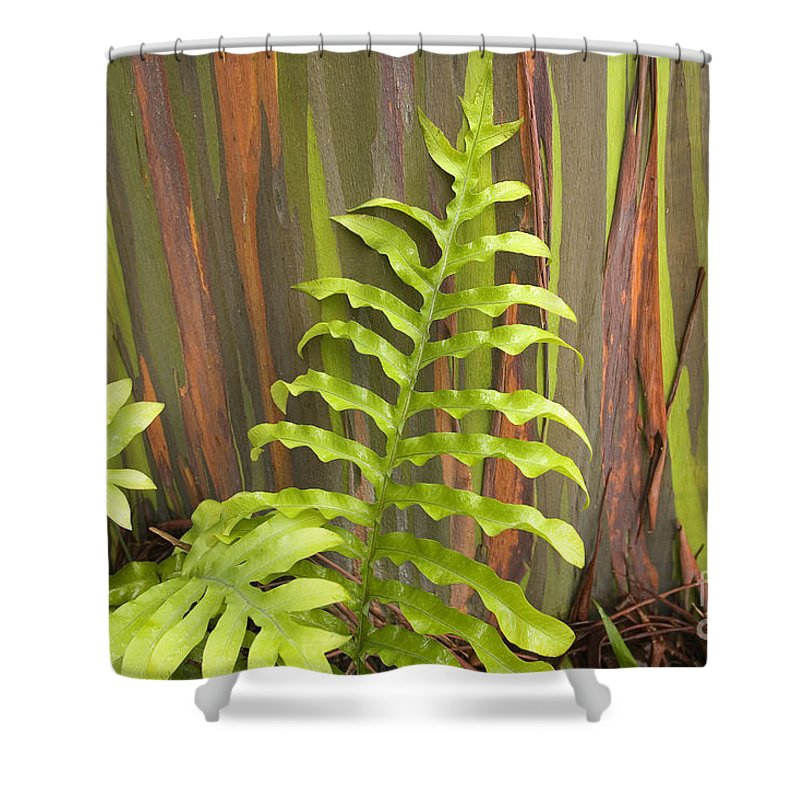 Background Shower Curtain featuring the photograph Rainbow Eucalyptus And Fern by Ron Dahlquist - Printscapes
