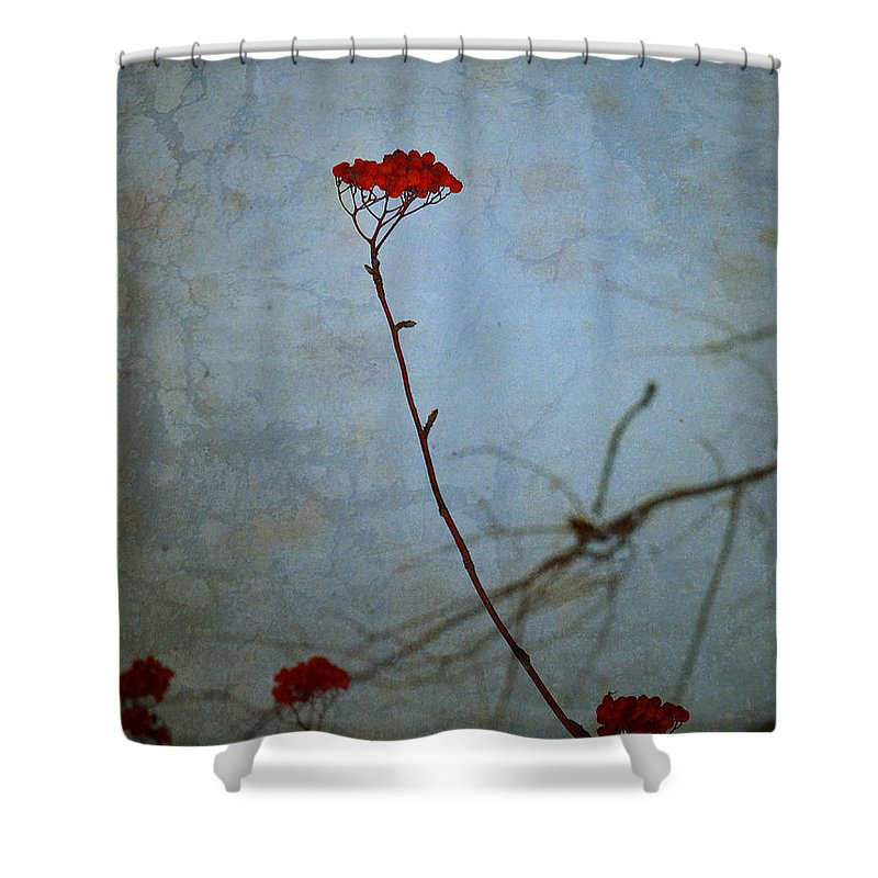 Blue Shower Curtain featuring the photograph Red Berries Blue Sky by Tara Turner