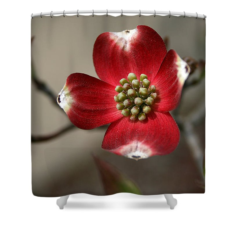 Flower Shower Curtain featuring the photograph Red Dogwood by Andrei Shliakhau