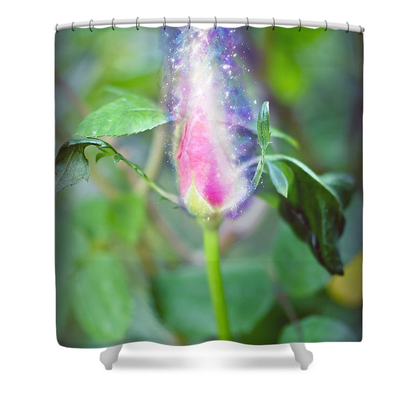 Exploding Shower Curtain featuring the photograph Red Garden Rose Bud by Humorous Quotes