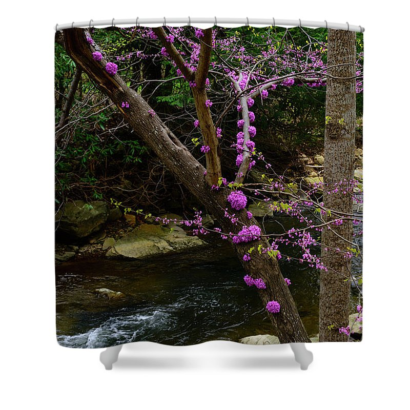 Spring Shower Curtain featuring the photograph Redbud And River by Thomas R Fletcher