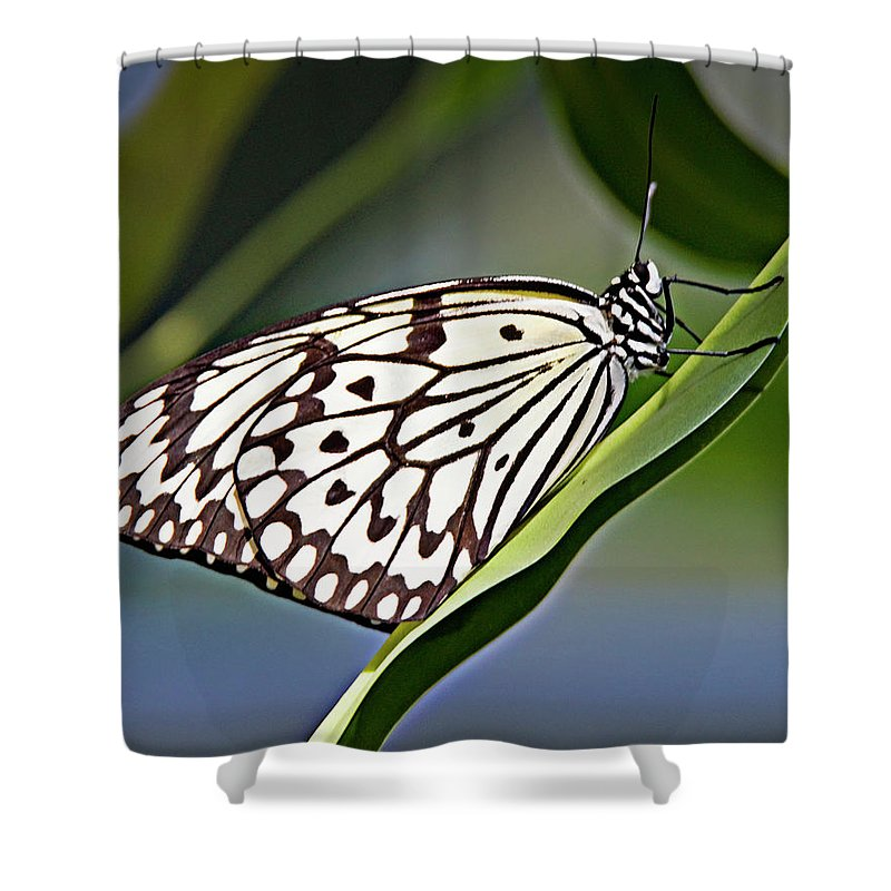 Butterfly Shower Curtain featuring the photograph Rice Paper Butterfly 8 by Walter Herrit