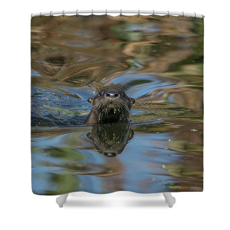 Usa Shower Curtain featuring the photograph River Otter by Brian Kamprath