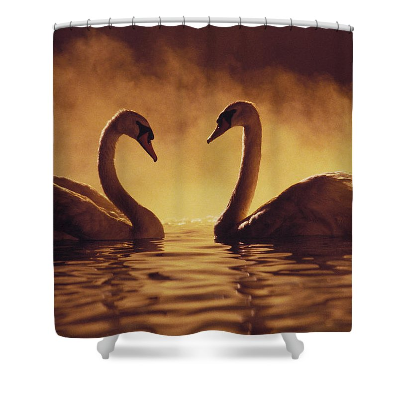Afternoon Shower Curtain featuring the photograph Romantic African Swans by Brent Black - Printscapes