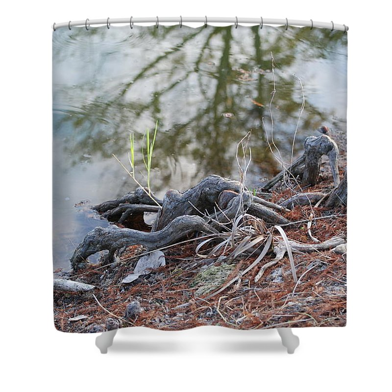 Roots Shower Curtain featuring the photograph Rooted Lake Edge by Rob Hans