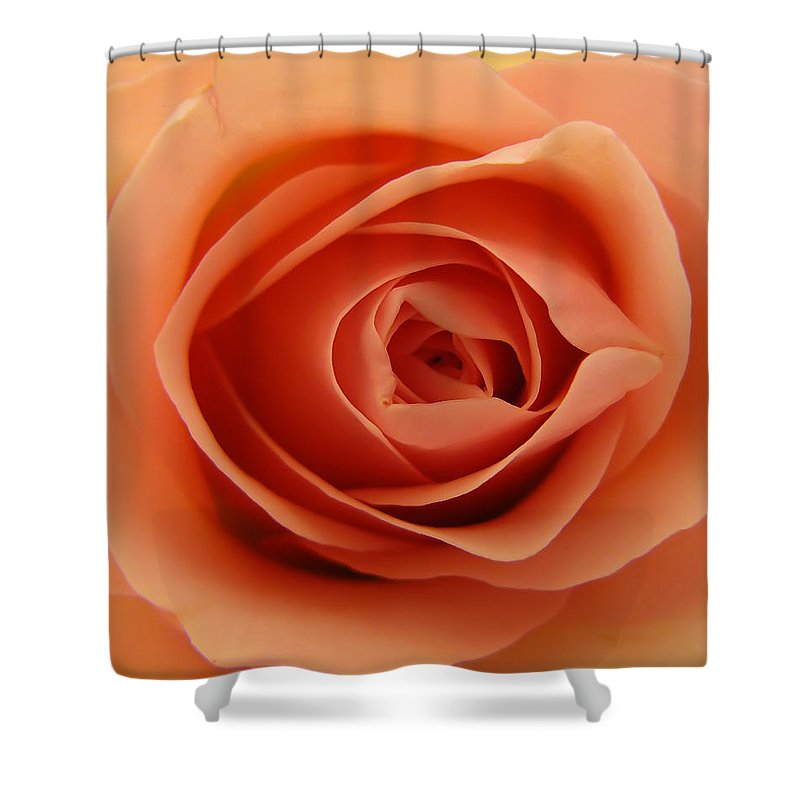 Rose Shower Curtain featuring the photograph Rose by Daniel Csoka