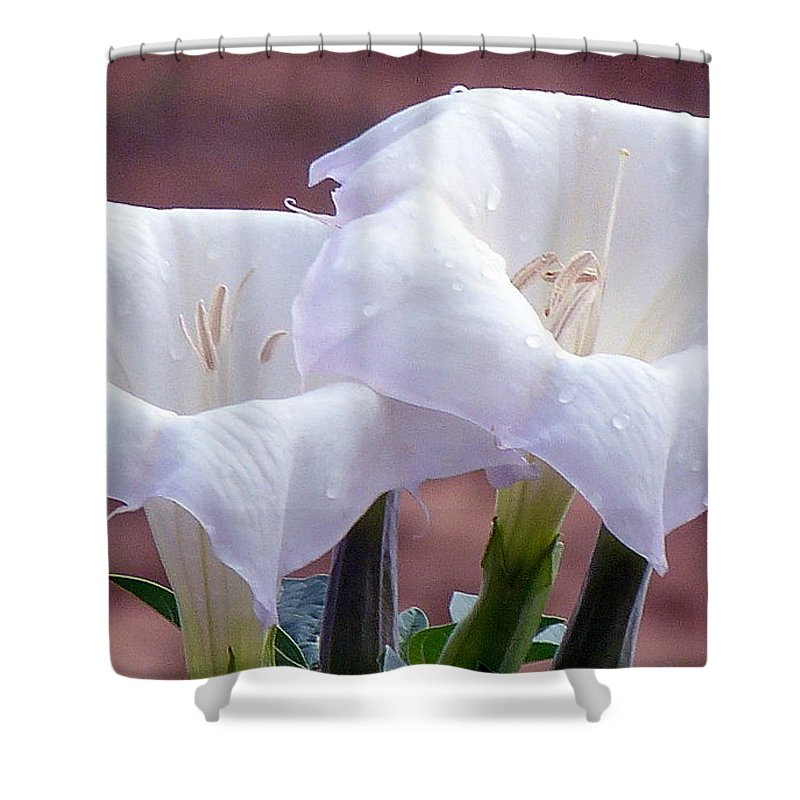 Utah Shower Curtain featuring the photograph Sacred Datura Photograph by Kimberly Walker