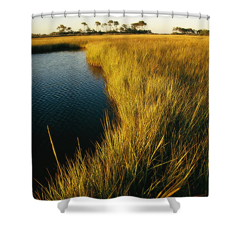North America Shower Curtain featuring the photograph Salt Marsh, Assateague Island, Virginia by Skip Brown
