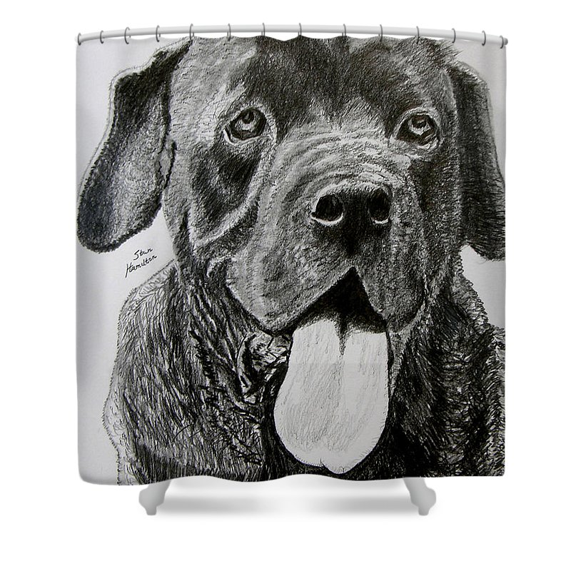 Dog Portrait Shower Curtain featuring the drawing Sampson by Stan Hamilton