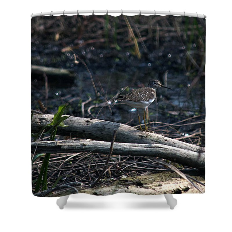 Solitary Sandpiper Shower Curtain featuring the photograph Sandpiper by Linda Kerkau