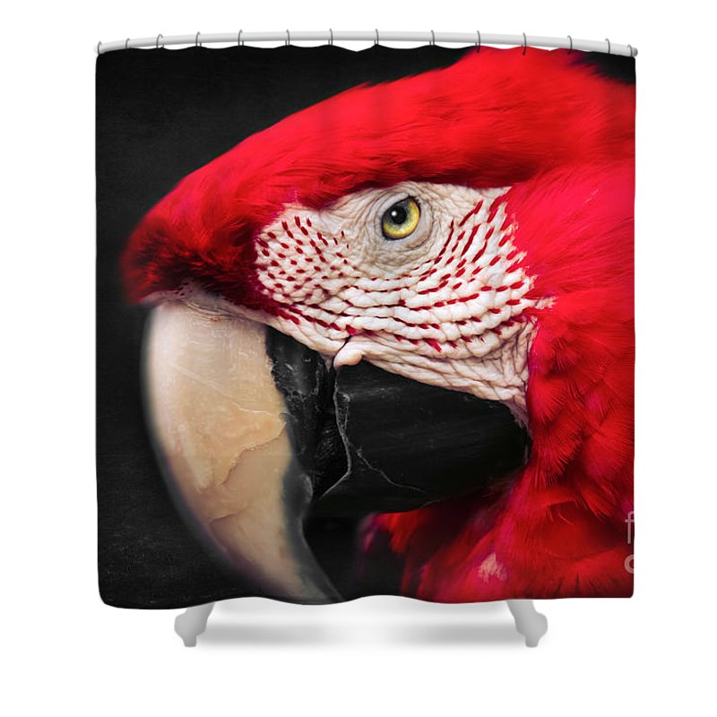 Scarlet Macaw Shower Curtain featuring the photograph Scarlet Macaw - Ara Macao by Sharon Mau