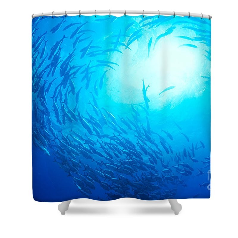 Bigeye Shower Curtain featuring the photograph School Of Bigeye Jacks by Dave Fleetham - Printscapes