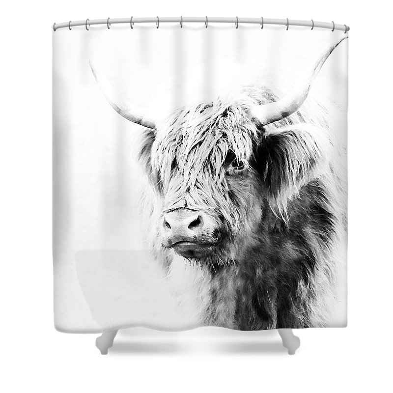 Scottish Highland Cow Shower Curtain Featuring The Photograph By Athena Mckinzie