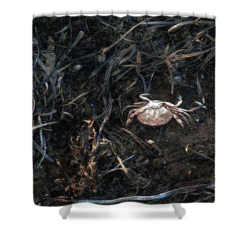 Beach Shower Curtain featuring the painting Scuttling To Safety by RC DeWinter
