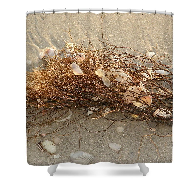 Seaweed Shower Curtain featuring the photograph Shells In Seaweed by Alice Markham