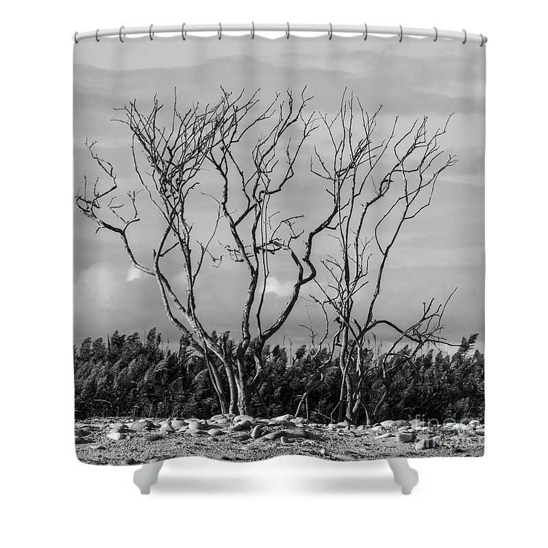 Natanson Shower Curtain featuring the photograph Silhouette by Steven Natanson