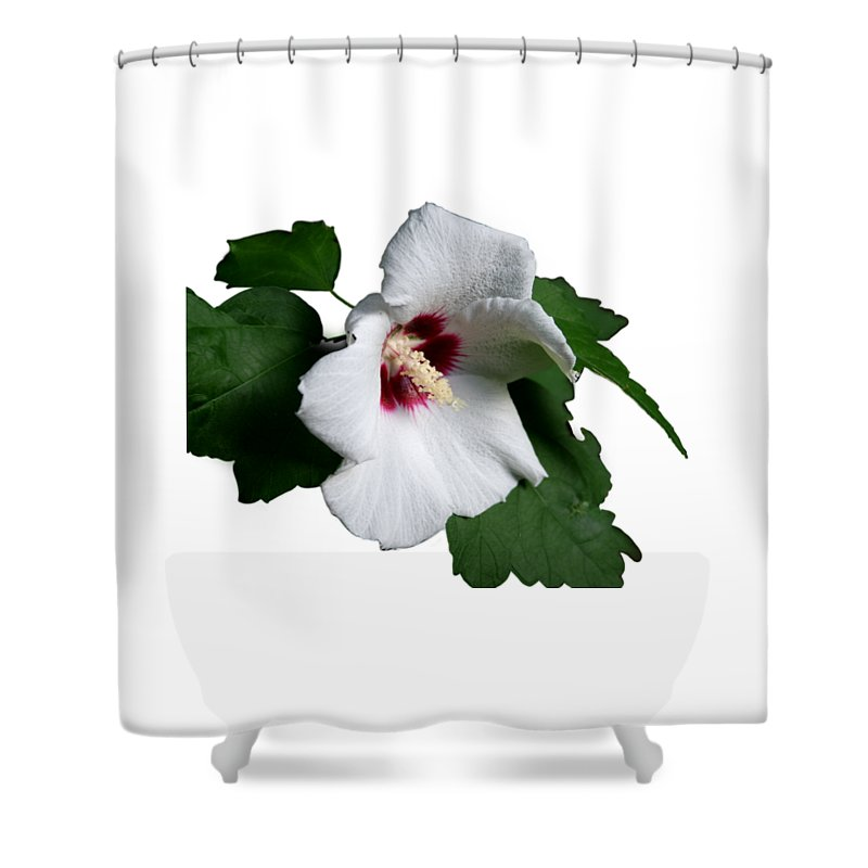 Flower Shower Curtain featuring the photograph Single Rose Sharron Flower by MountainSky S