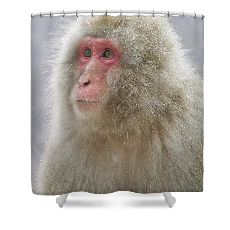 Japan Shower Curtain featuring the photograph Snow-dusted Monkey by Michele Burgess