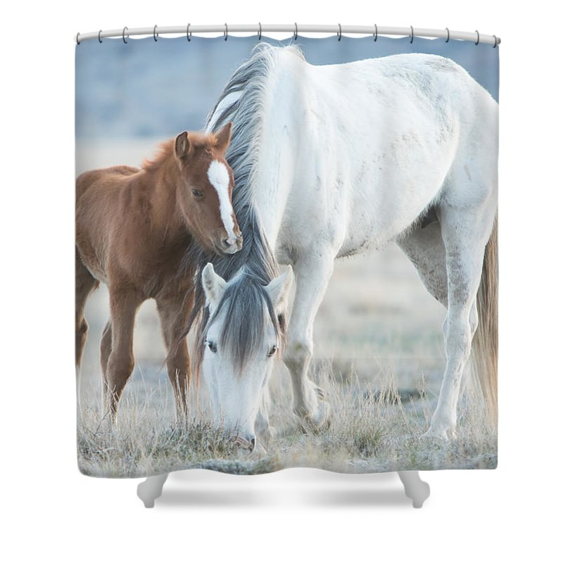 Horse Shower Curtain featuring the photograph Snow White And Valentino by Kent Keller