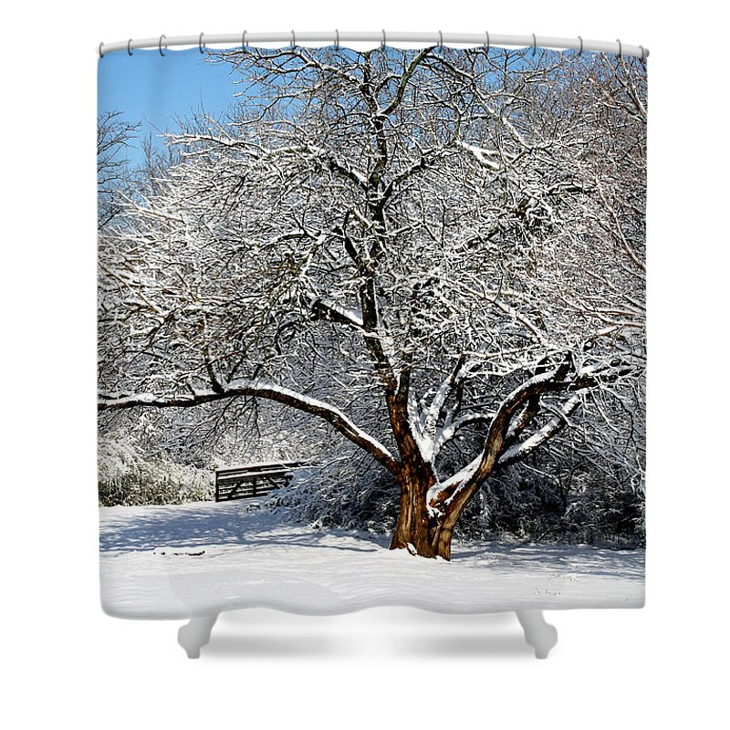 Landscapes Shower Curtain featuring the photograph Snowy Tree by Terri Morris