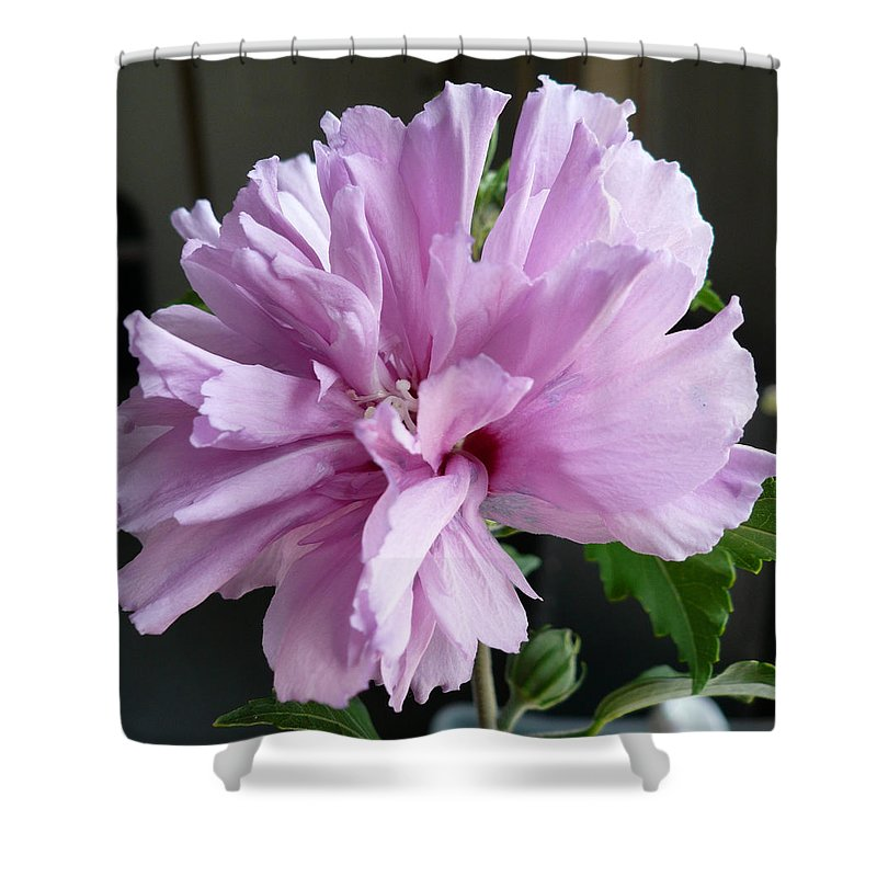 Phoyography.hibiscus Flower Floral Bloom Bush Pink Shower Curtain featuring the photograph So Pink by Karin Dawn Kelshall- Best