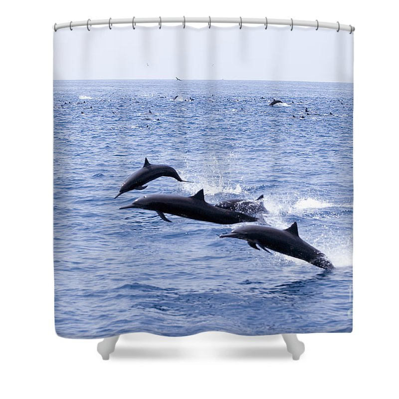 Amaze Shower Curtain featuring the photograph Spinner Dolphins by Rick Gaffney - Printscapes