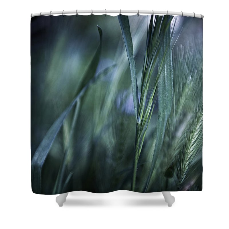 Landscape Shower Curtain featuring the photograph Spring Grass Emerging by Sheryl Karas