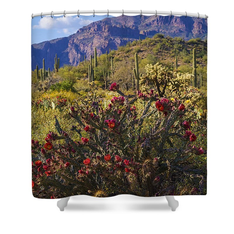 Cholla Cactus Shower Curtain featuring the photograph Spring In The Desert by Saija Lehtonen