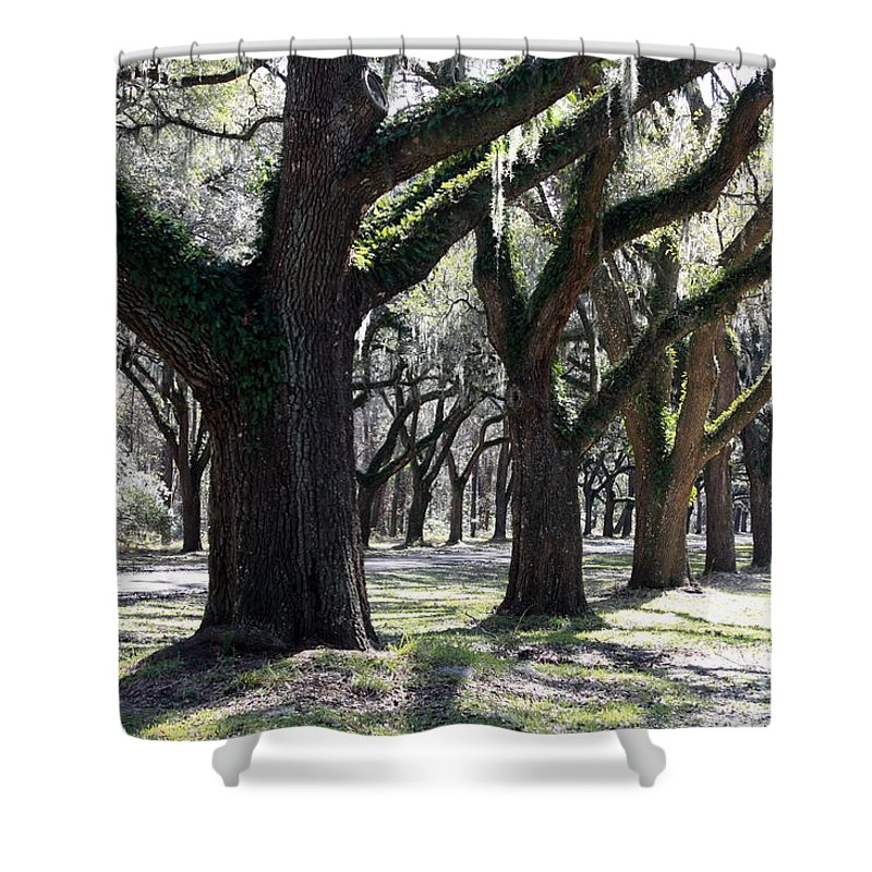 Row Of Trees Shower Curtain featuring the photograph Strong Trees In The South by Carol Groenen