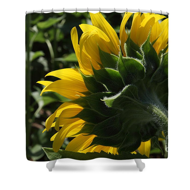 Sunflower Shower Curtain featuring the photograph Sunflower Series 09 by Amanda Barcon