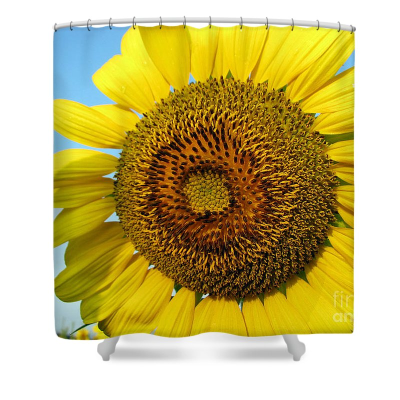 Sunflower Shower Curtain featuring the photograph Sunflower Series by Amanda Barcon