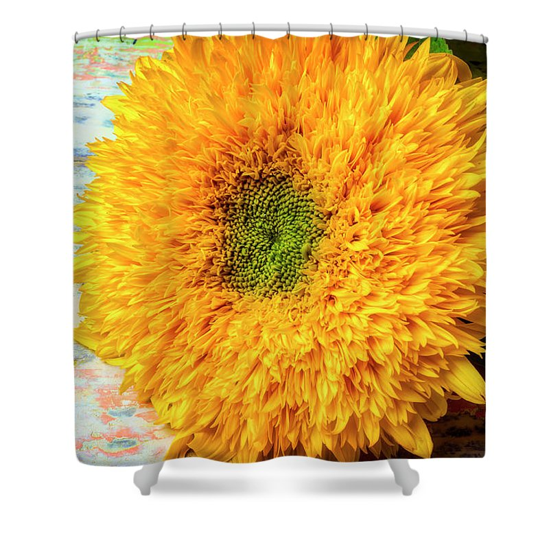 Sunflower Shower Curtain featuring the photograph Sunflower Study by Garry Gay