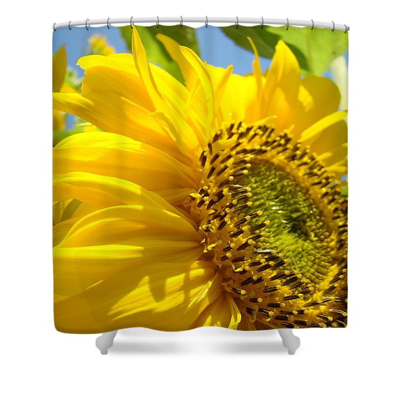 Sunflower Shower Curtain featuring the photograph Sunflowers Art Prints Sun Flower Giclee Prints Baslee Troutman by Baslee Troutman