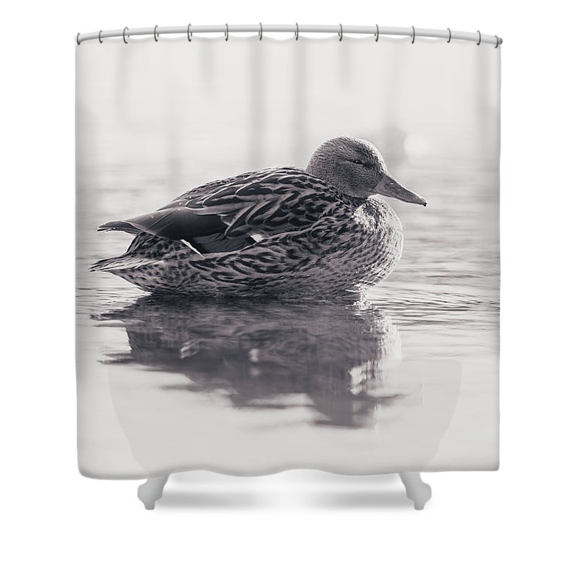Duck Shower Curtain featuring the photograph Sunrise by Annette Bush