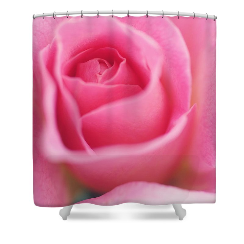 Shower Curtain featuring the photograph Sweet Rosiness by The Art Of Marilyn Ridoutt-Greene