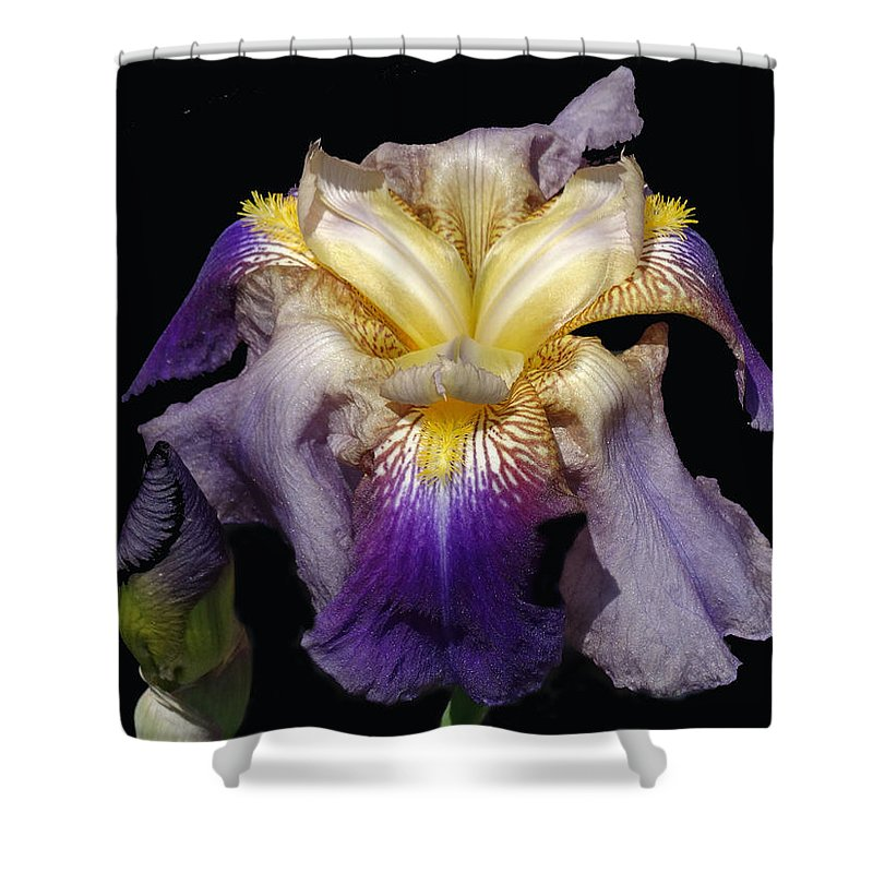Flower Shower Curtain featuring the photograph Tall Bearded Iris by Greg Boutz