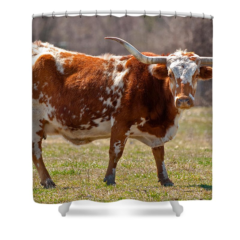 Animal Shower Curtain Featuring The Photograph Texas Longhorn Cow Standing In Field By Onyonet Photo Studios