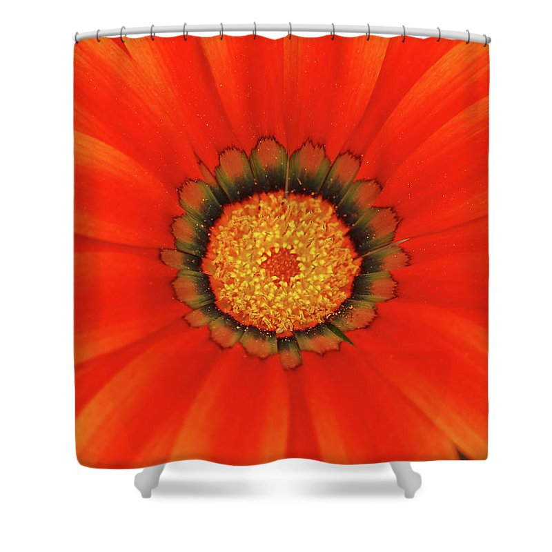 Daisy Shower Curtain featuring the photograph The Beauty Of Orange by Lori Tambakis